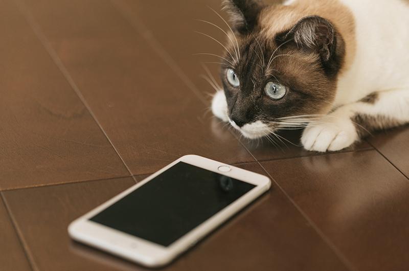 cat9V9A9021_TP_V_m